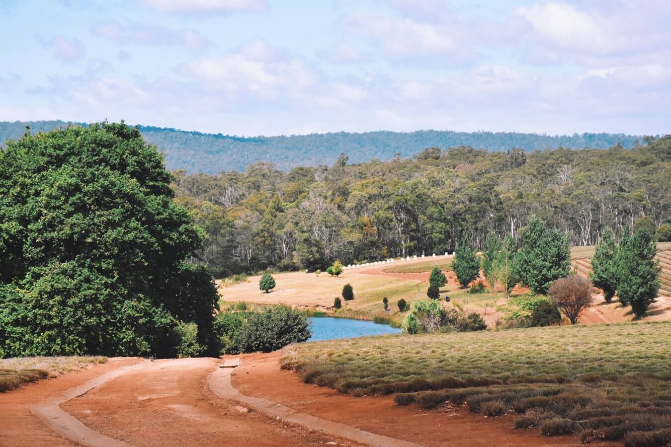 Don't Miss These Top Off-Road Tracks in Tasmania