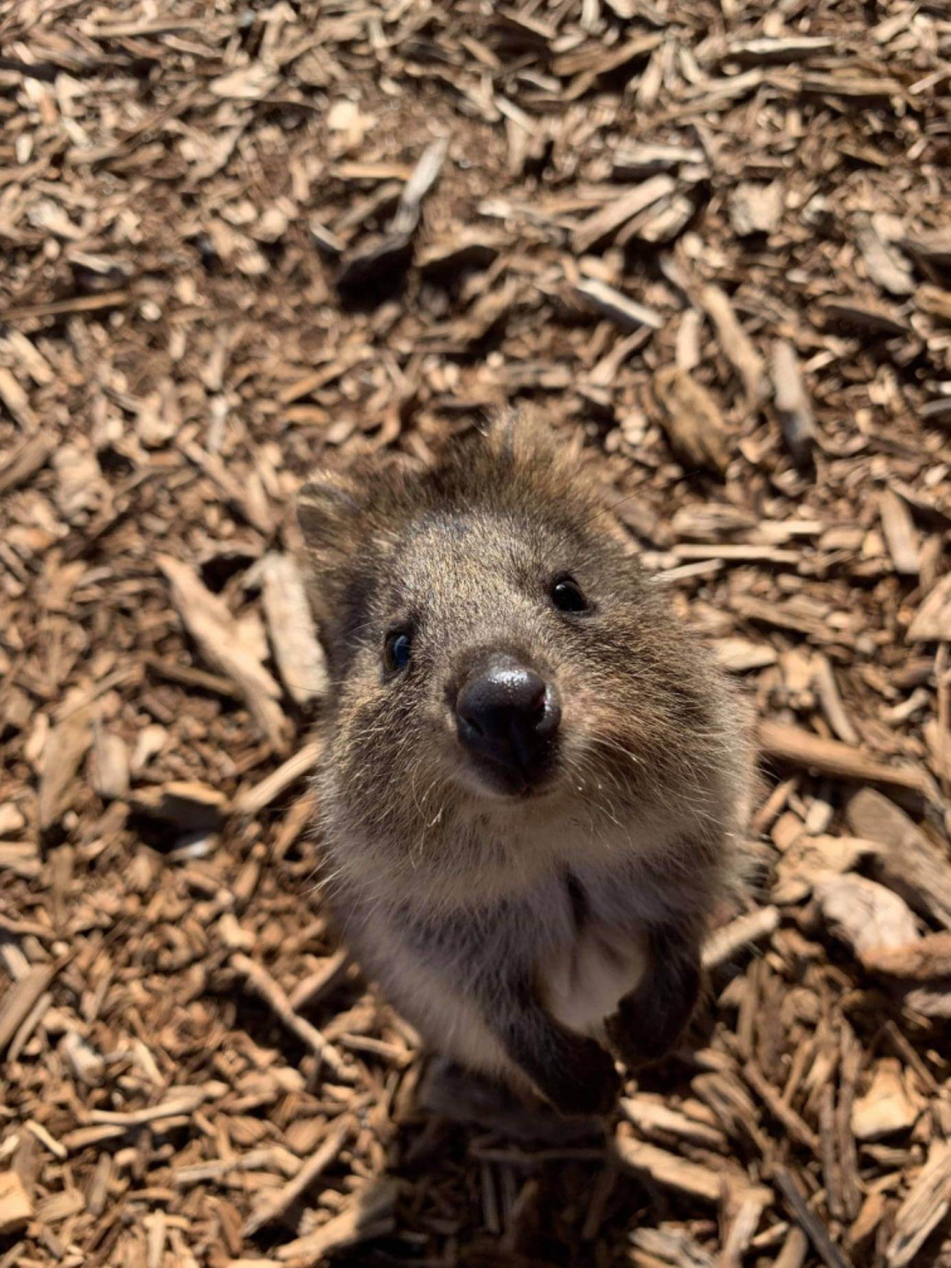 4WD Accidents: What to do if you hit an animal while driving